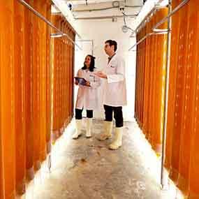 Cawthron-AQ-Land-based Aquaculture Technologies