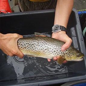 Cawthron-FW-Salmonid Fisheries