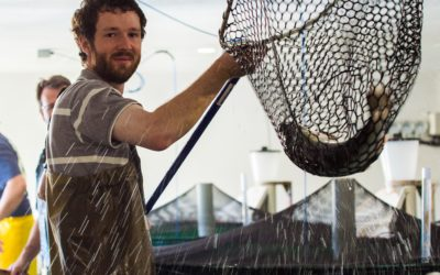 Salmon Feed Conversion Efficiency Research Programme